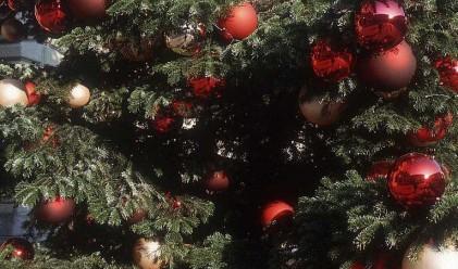 Празничните елхи поевтиняха на половина след Коледа