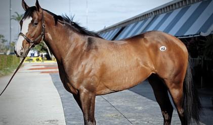 Най-скъпите състезателни коне