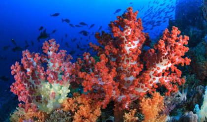 Първият движещ се подводен хотел ще може да