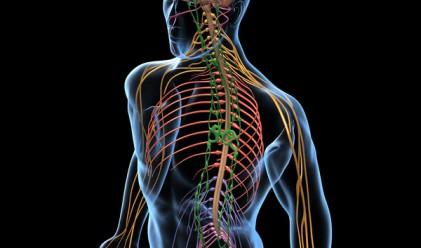 20 изумителни факти за човешкото тяло, които не знаехте