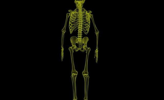 Знаете ли че: в древността мъжете са имали кост в пениса си