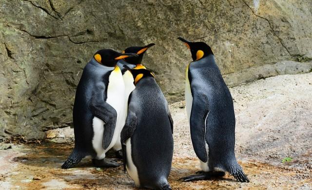 Китайски зоопарк показа надуваеми вместо истински пингвини