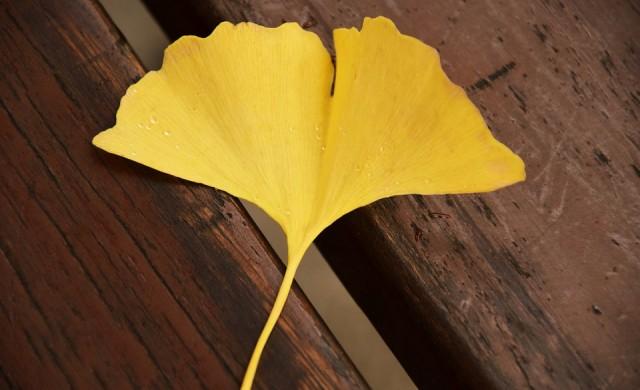 Тя създава шедьоври от есенни листа