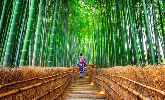 Японската традиция за горско къпане