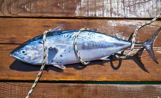 Милениалите не ядат риба тон. Те дори нямат отварачки за консерви