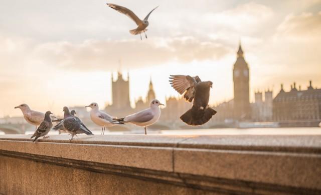 Великобритания спира издаването на визи на чуждестранни богаташи