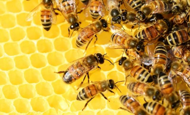 Финландски учени разработиха ваксина за пчели