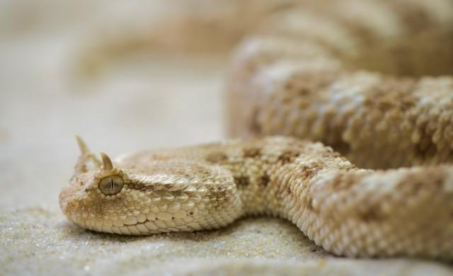 Момче принудено да смени тениска със змия, за да се качи на полет