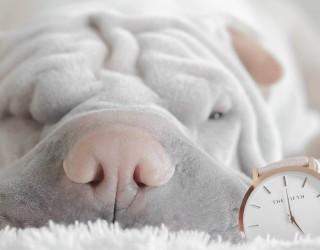 Компания търси идеалния служител, който да работи, докато спи